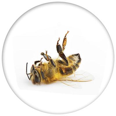 Bienensterben - Gemeinsam aufhalten!