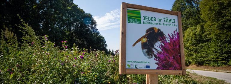 Bienenweide - Landwirt Kastenberger - Der Biene zuliebe
