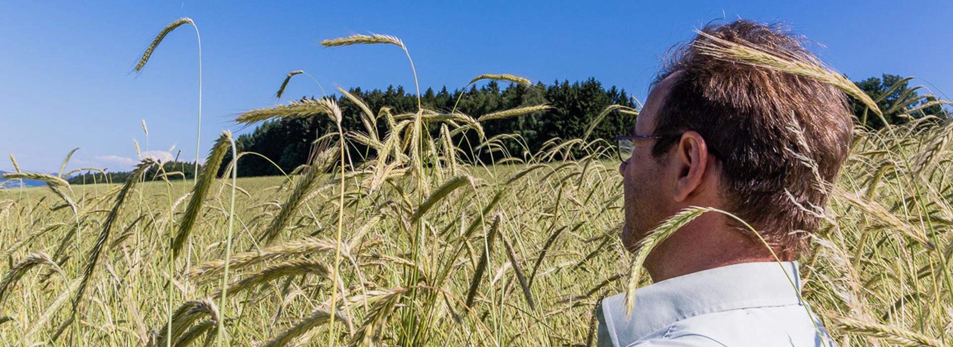 Waldstaudenkorn - Landwirt Kastenberger